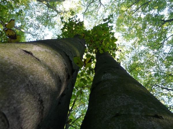 Bild mit Blick in Baumkronen